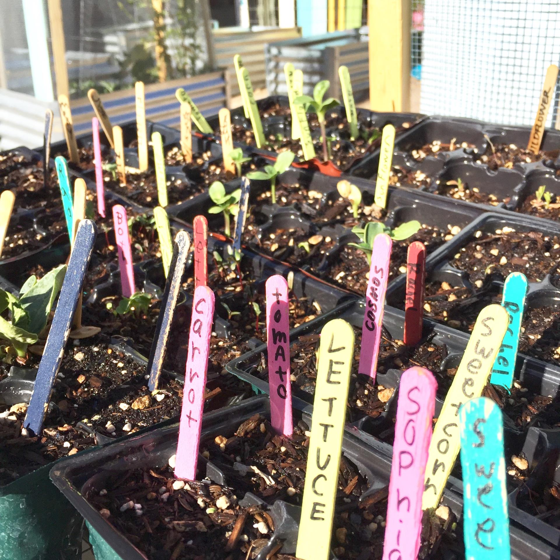 seedlings with colorful markers